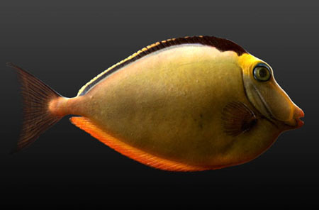 Zbrush Fish Digital 3D Sculpture by Miguel Ortega